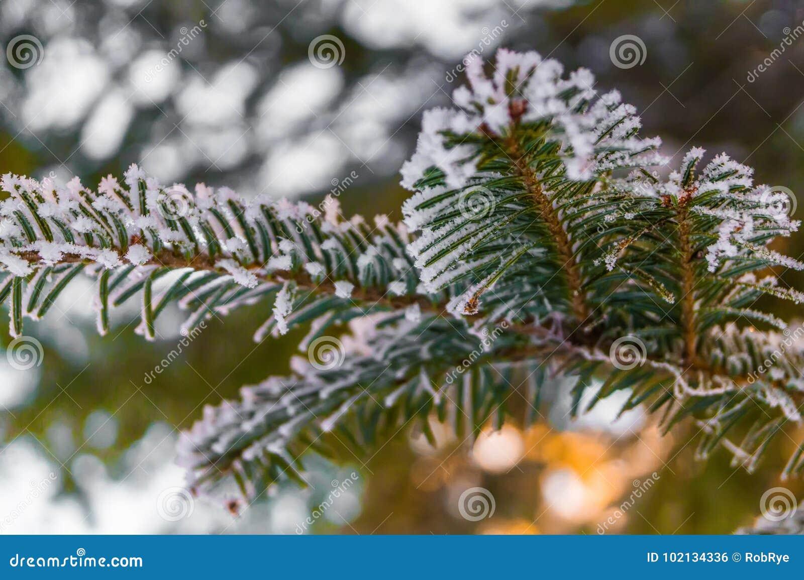 Dream Dream Fir, spruce, what dreams of Fir, spruce in a dream to see 11