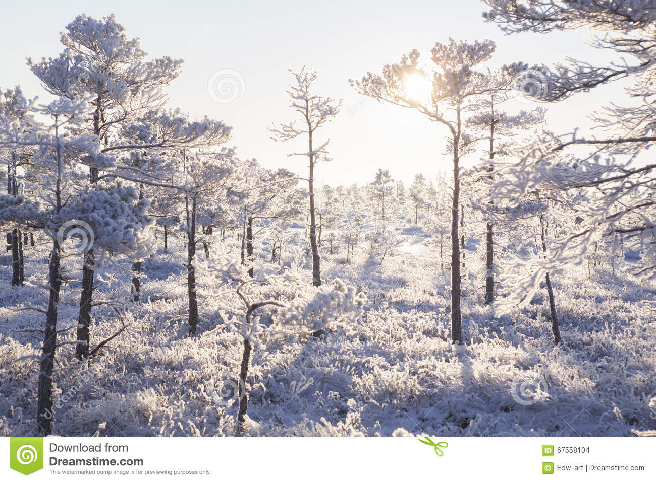 Frosty Morning In The Forest Royalty Free Stock