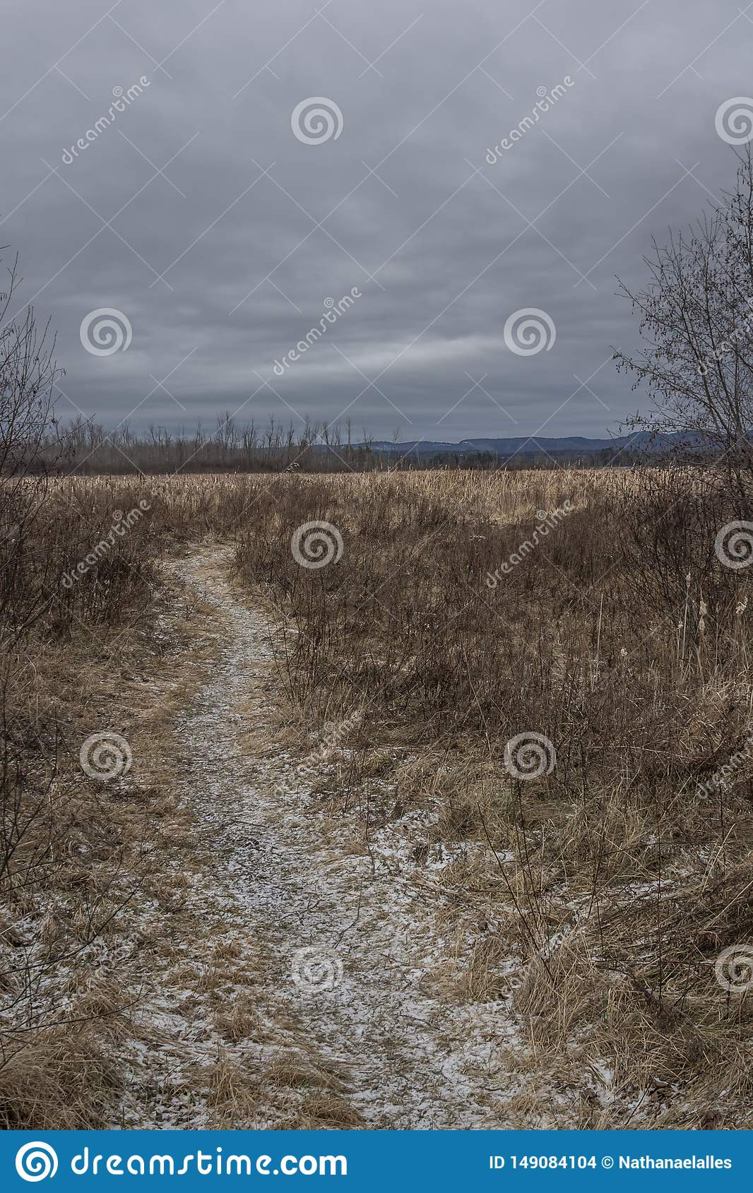 Frosty path through dried winter grass