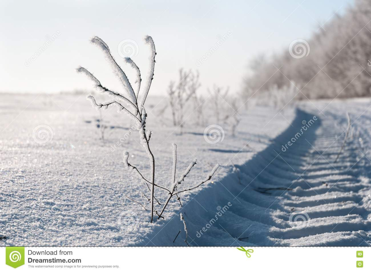 Frozen branch stock image. Image of december, nature ...