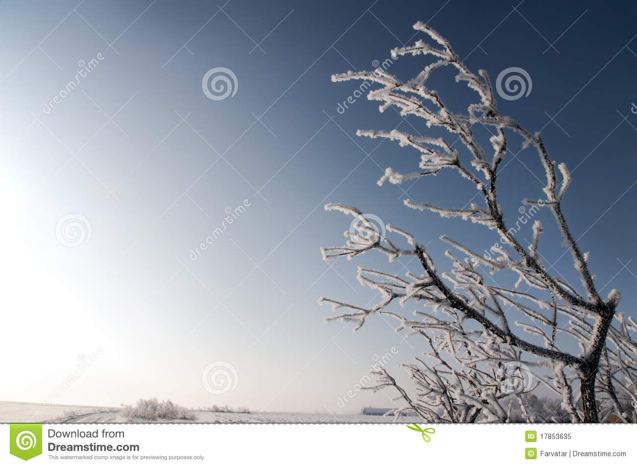Frozen branch stock image. Image of january, nature ...