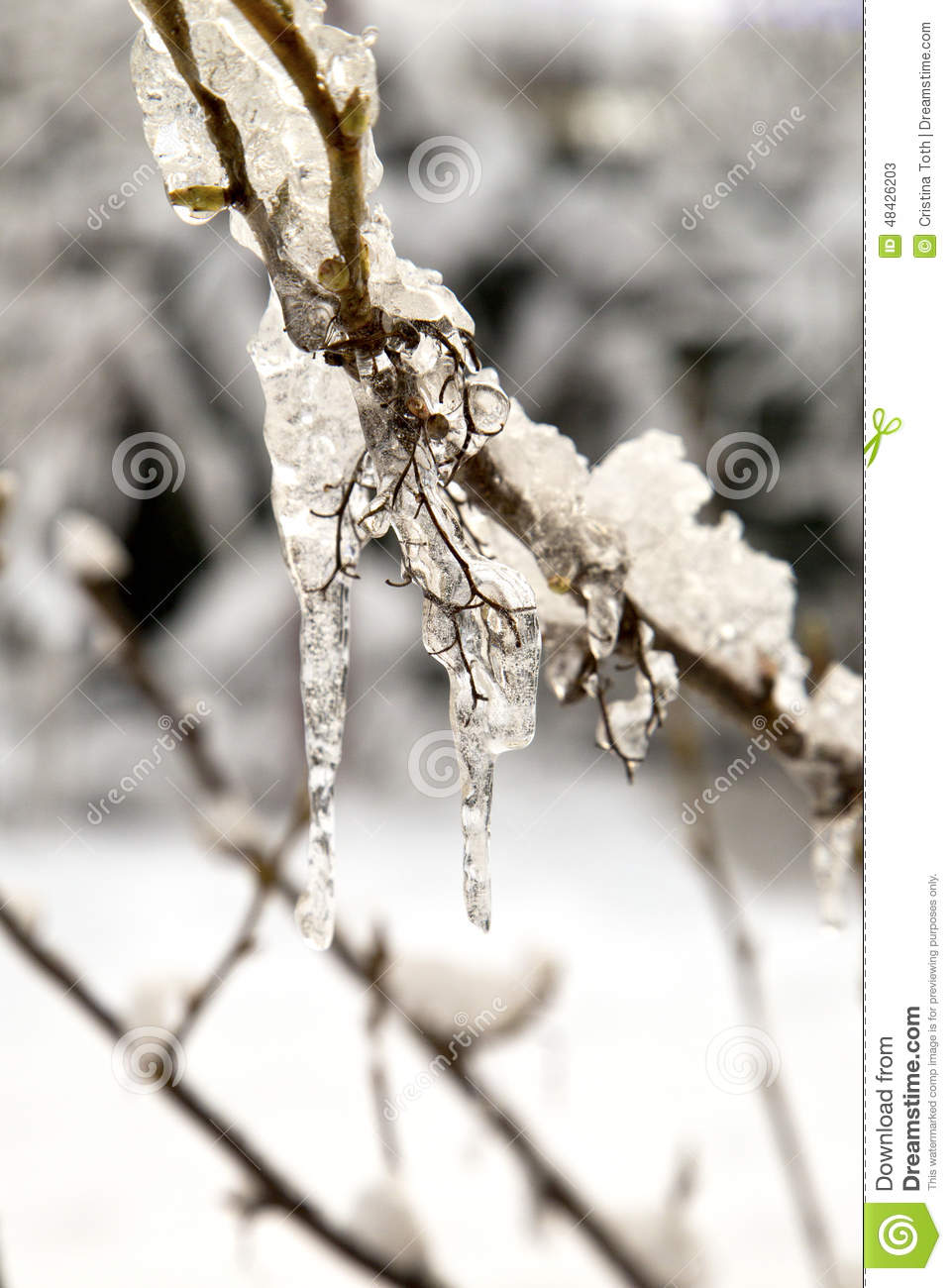 frozen buds on a - photo #9