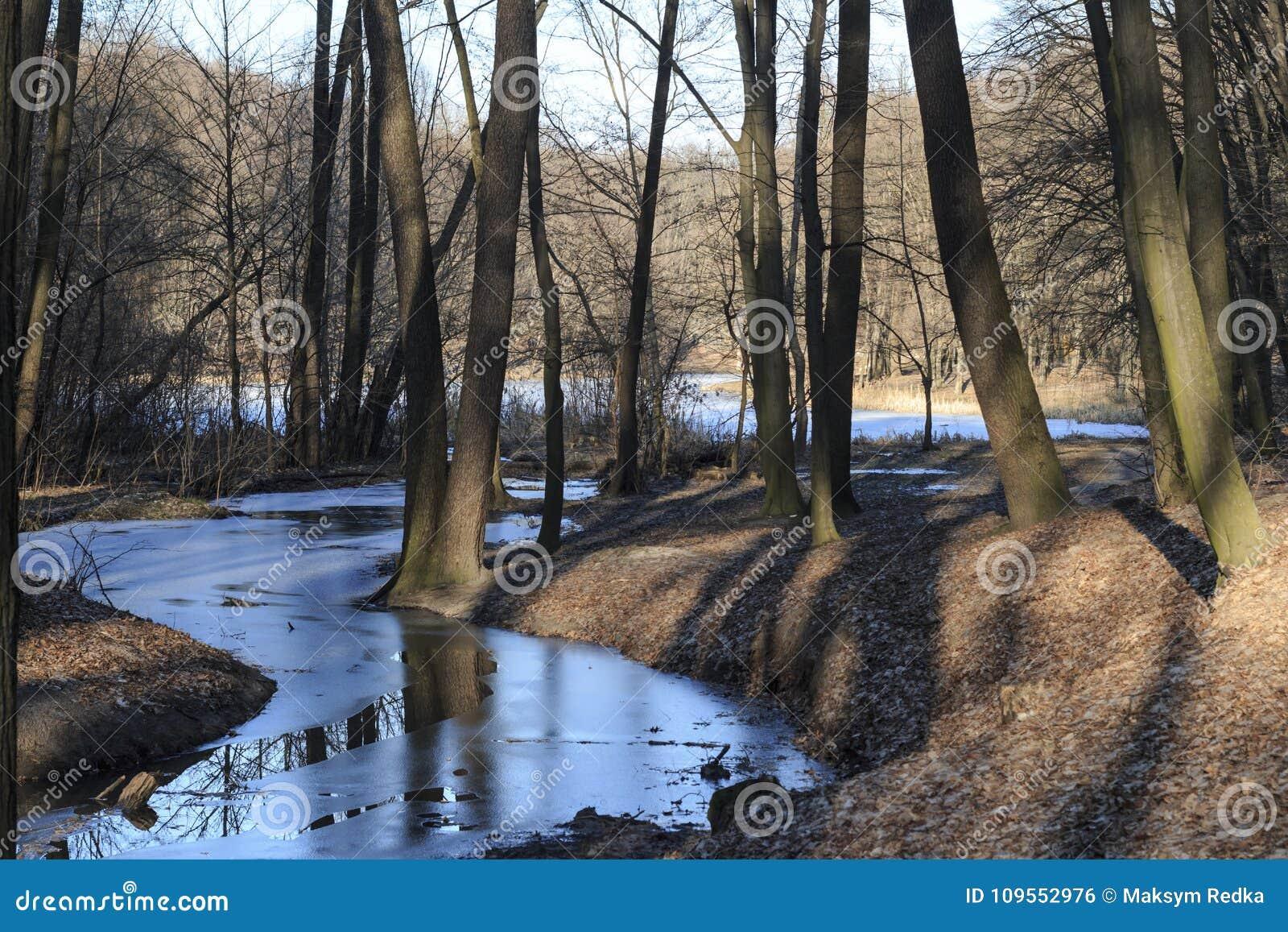 Frozen creek in a winter forest