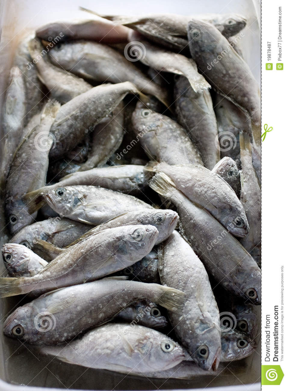 Frozen fish royalty free stock photography image 19878487 for Frozen fish food