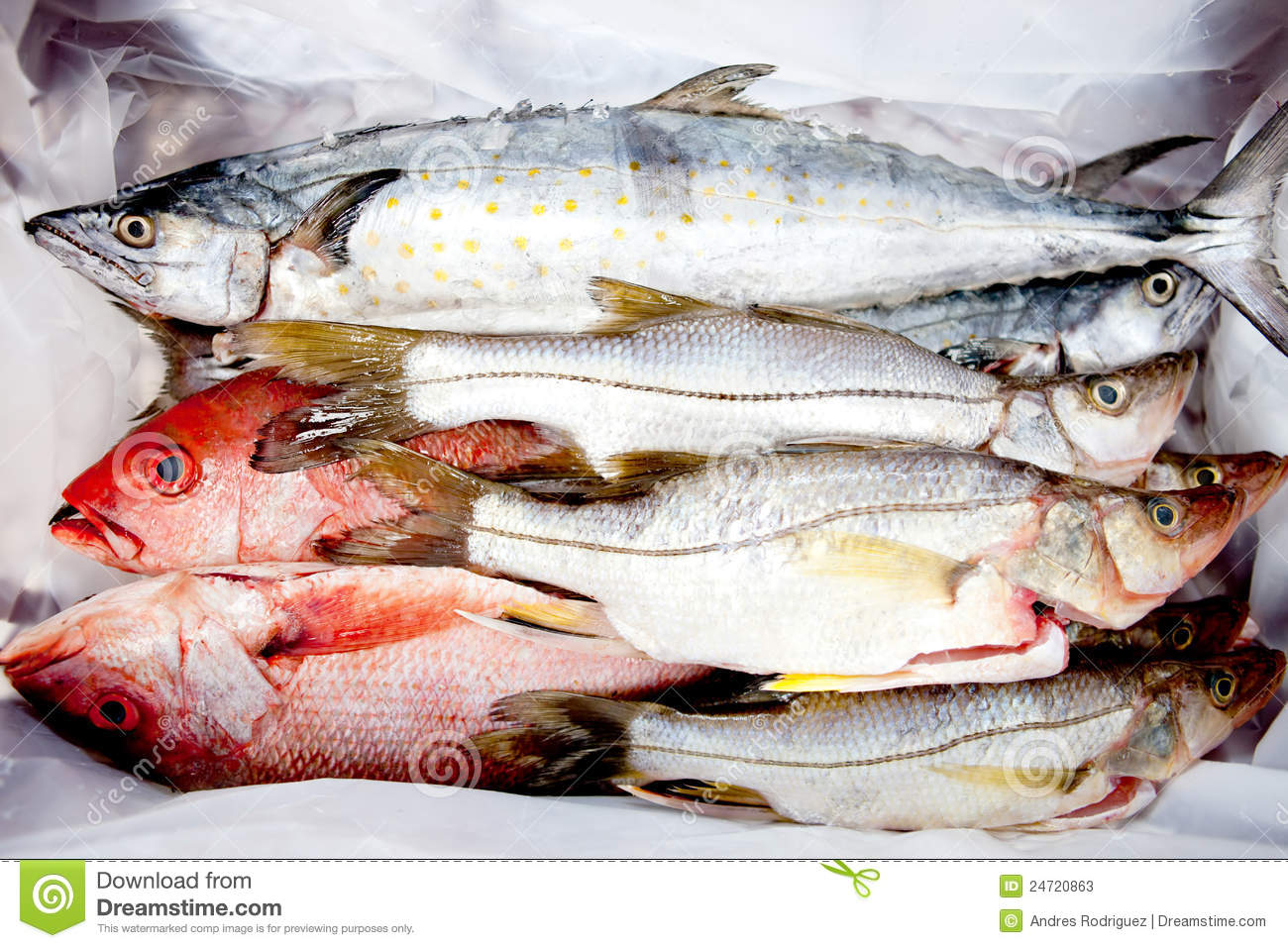 Frozen fish stock photos image 24720863 for Frozen fish food