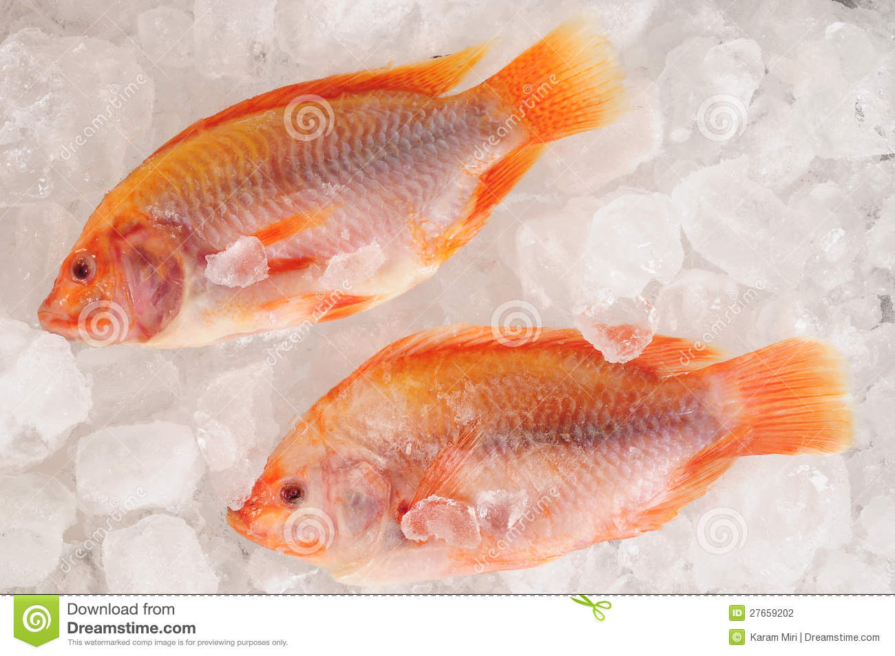 Frozen fish stock photography image 27659202 for Best frozen fish to buy at grocery store