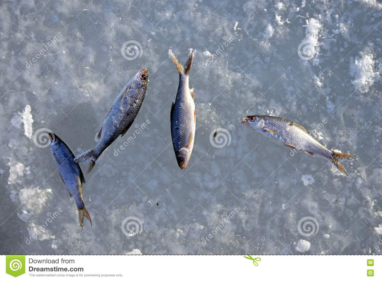 Frozen fish royalty free stock photo image 441155 for Best frozen fish to buy at grocery store