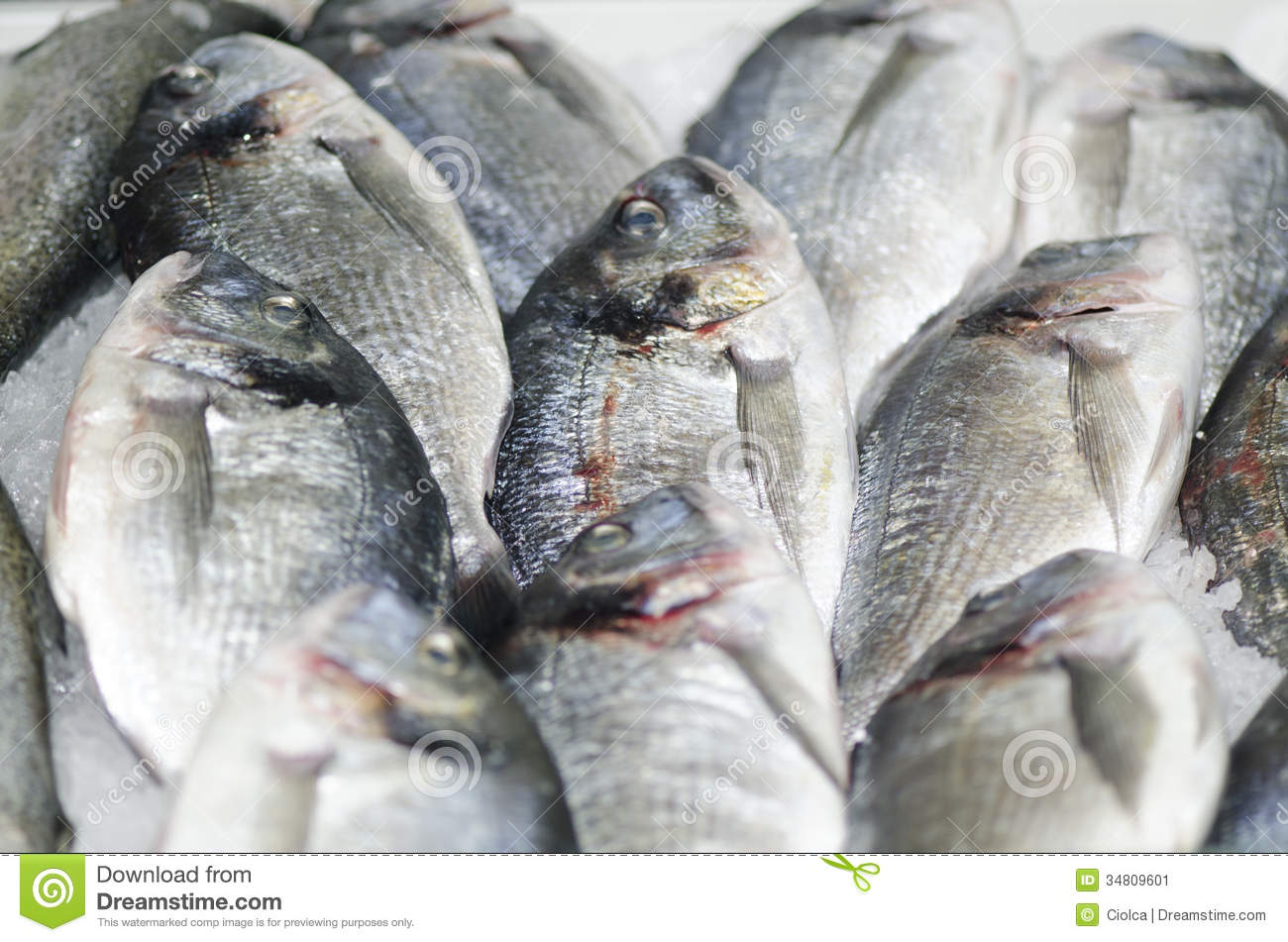 Frozen fish stock image image 34809601 for How to freeze fish