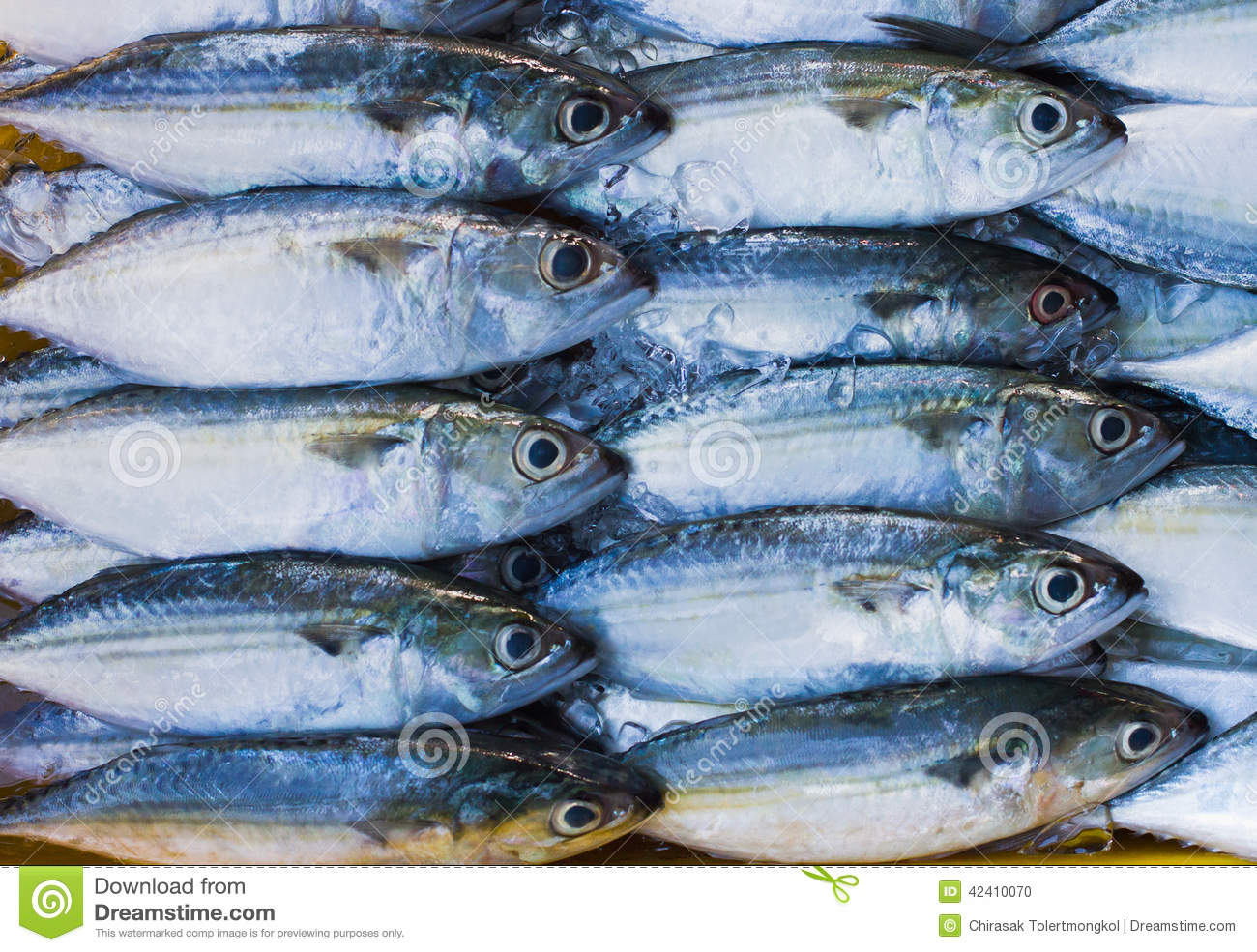 Frozen fish stock photo image 42410070 for How to freeze fish