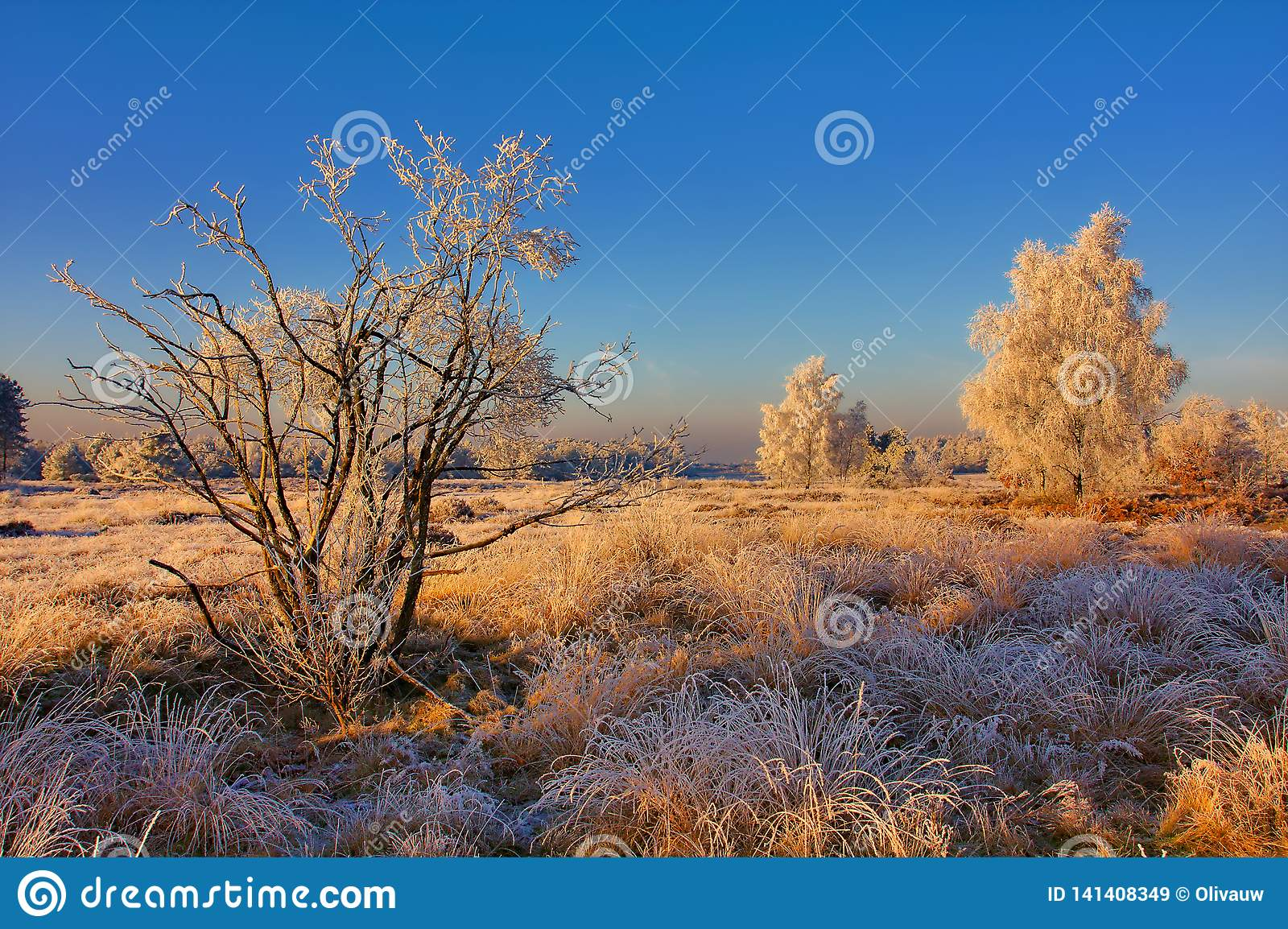 Frosted Landscape