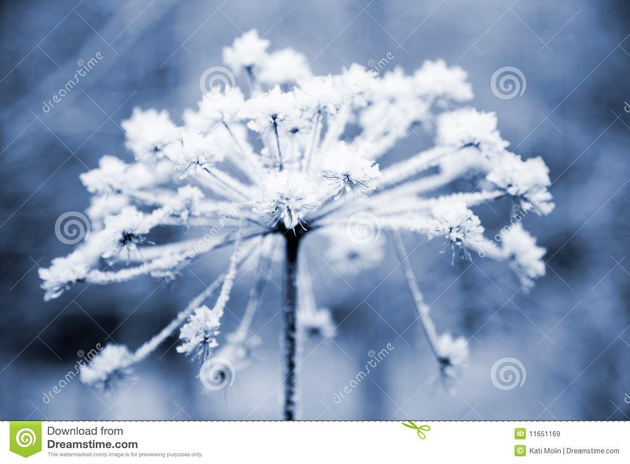 Frozen Flower Royalty Free Stock Image