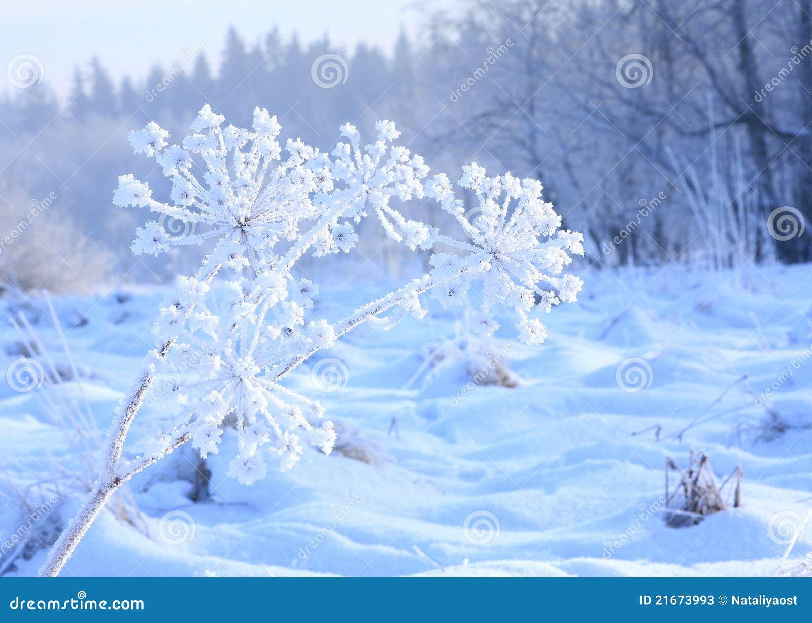 Frozen Flower Part4 Picture Hot Girls Wallpaper
