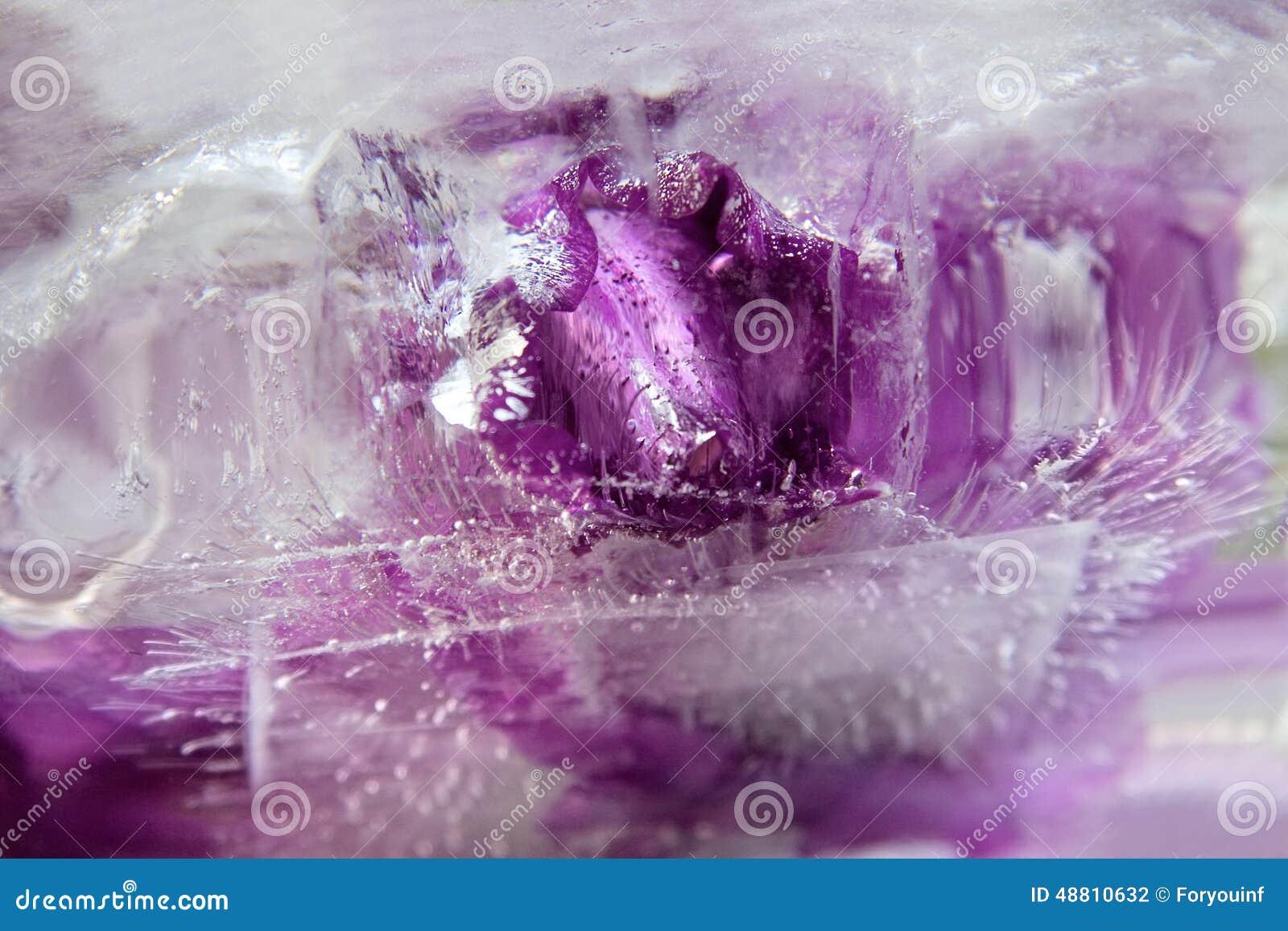 Frozen Flower Gladiolus Stock Image