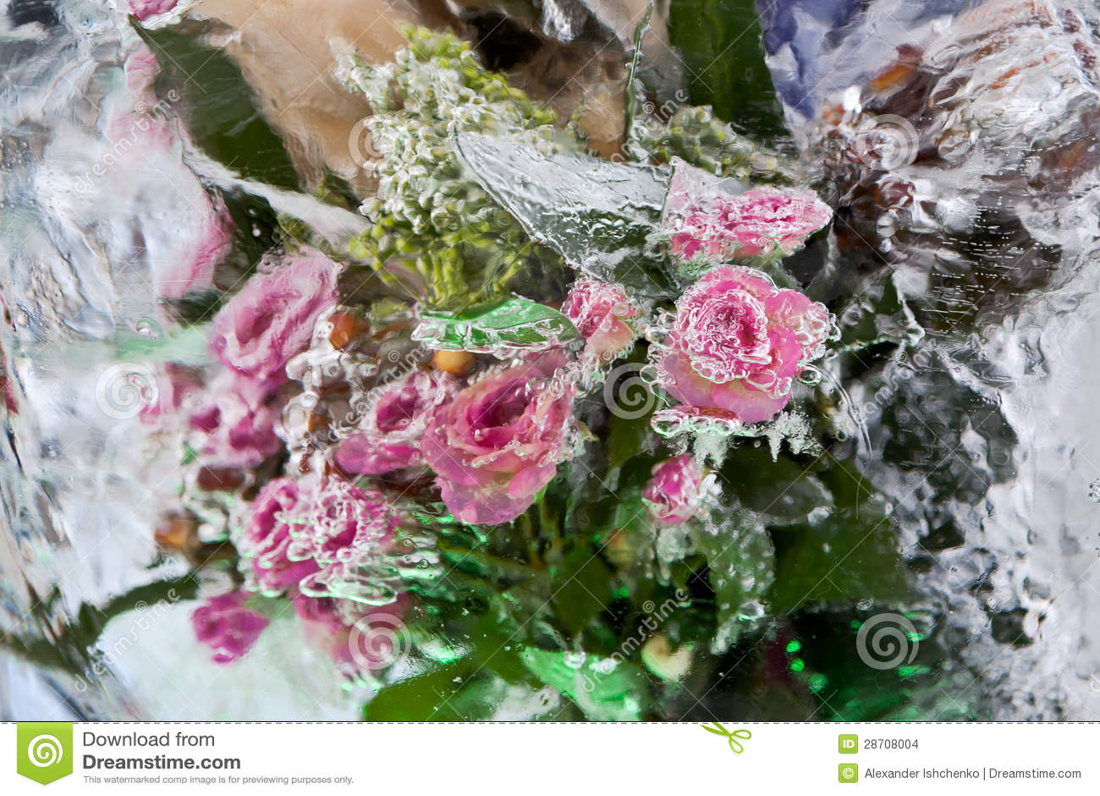 Frozen Flowers Stock Image