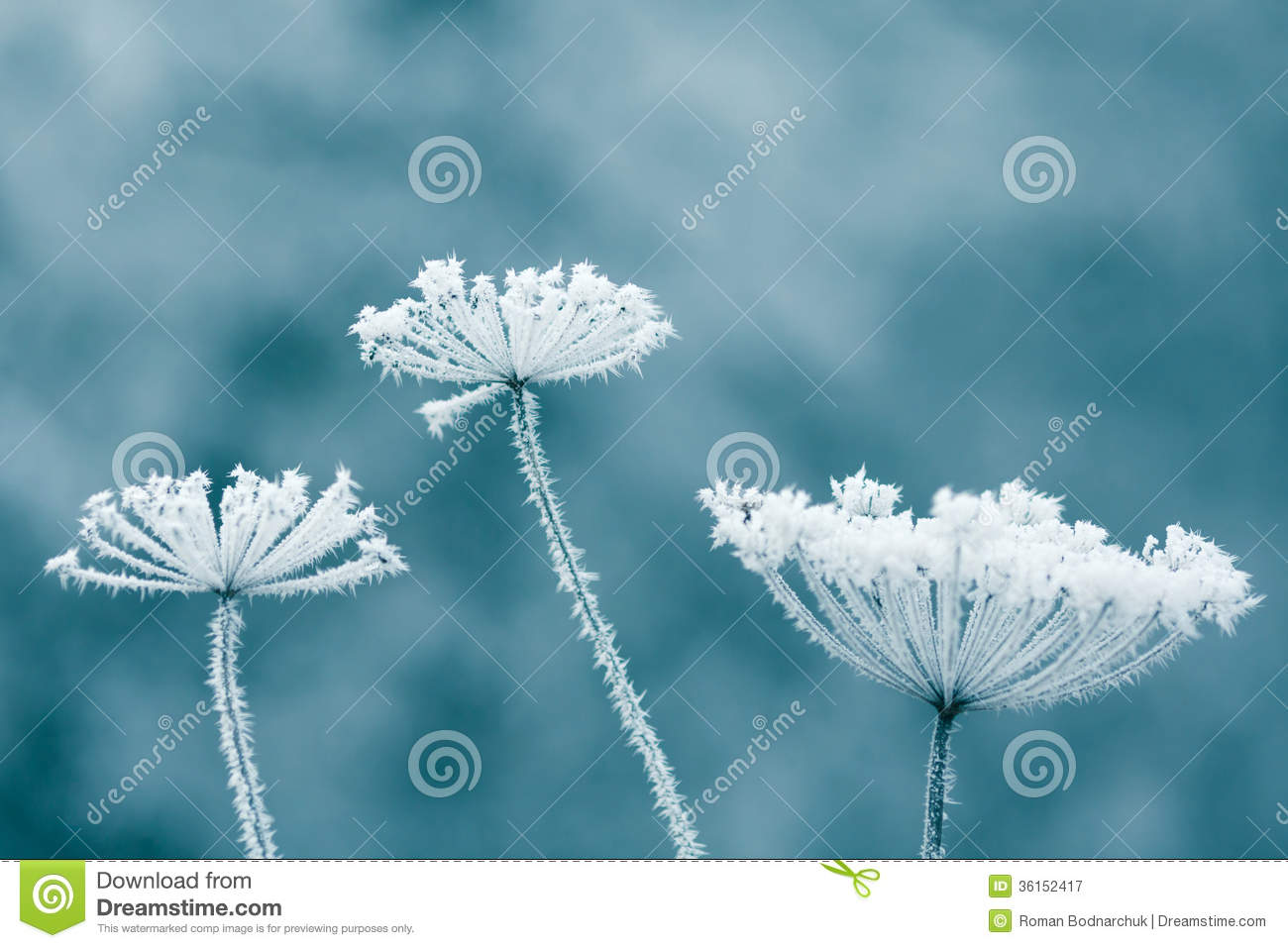 Frozen Flowers Royalty Free Stock graphy Image