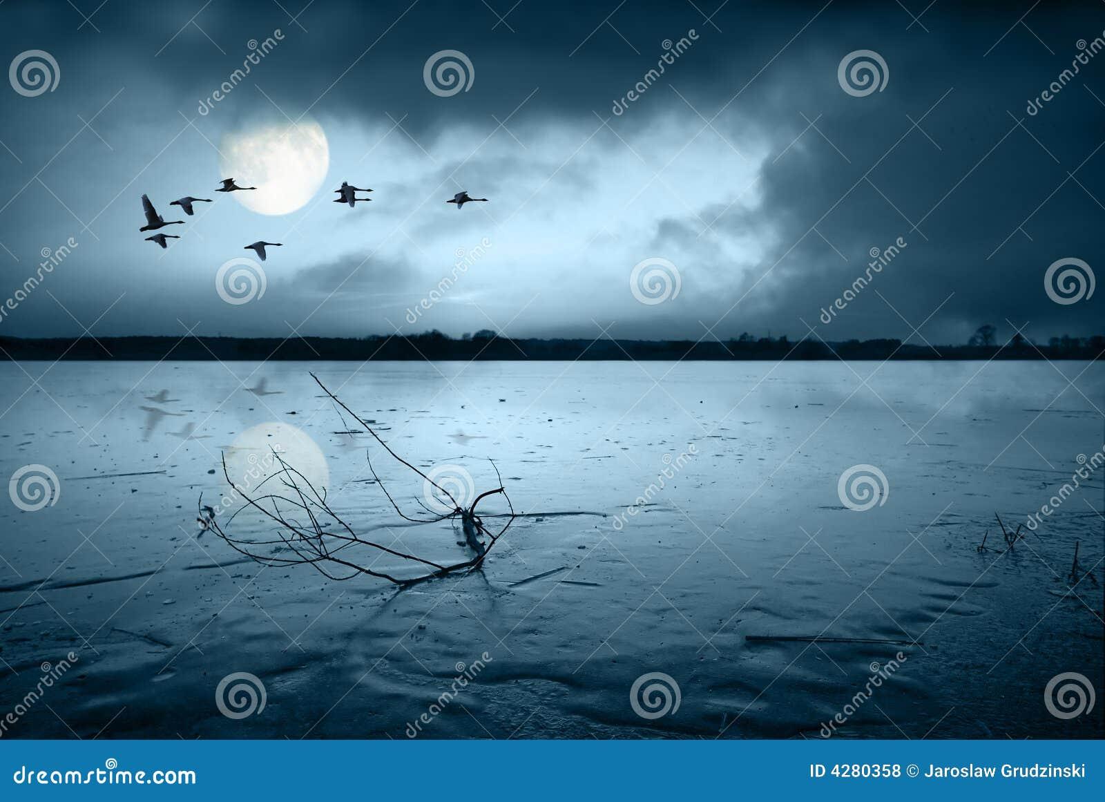 Download Frozen lake in moonlight stock photo. Image of frozen - 4280358