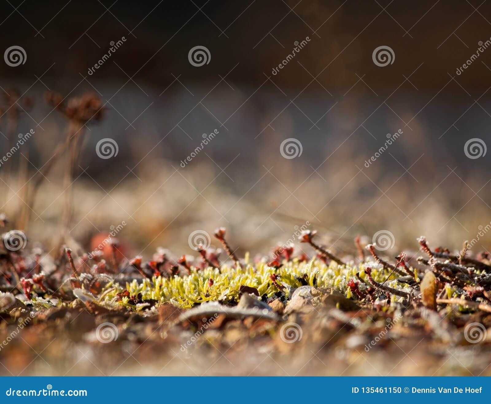 Frozen moss.