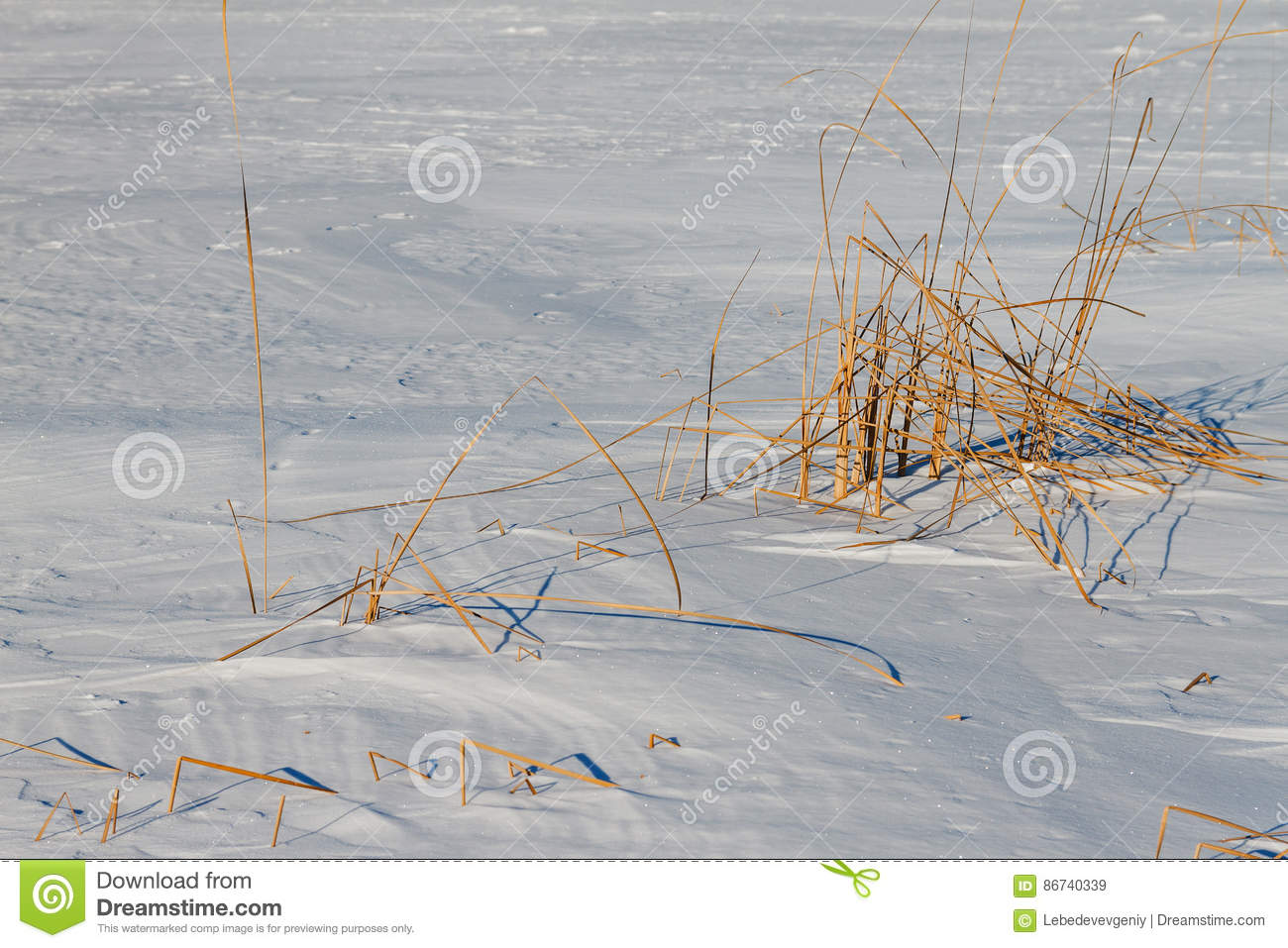 Download The Frozen River With A Dry Cane On The Island Stock Image - Image of environment, bulrush: 86740339