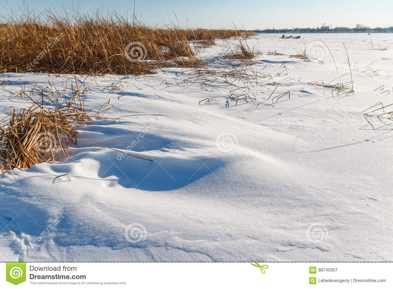 Download The Frozen River With A Dry Cane On The Island Stock Image - Image of nature, hoarfrost: 86740357