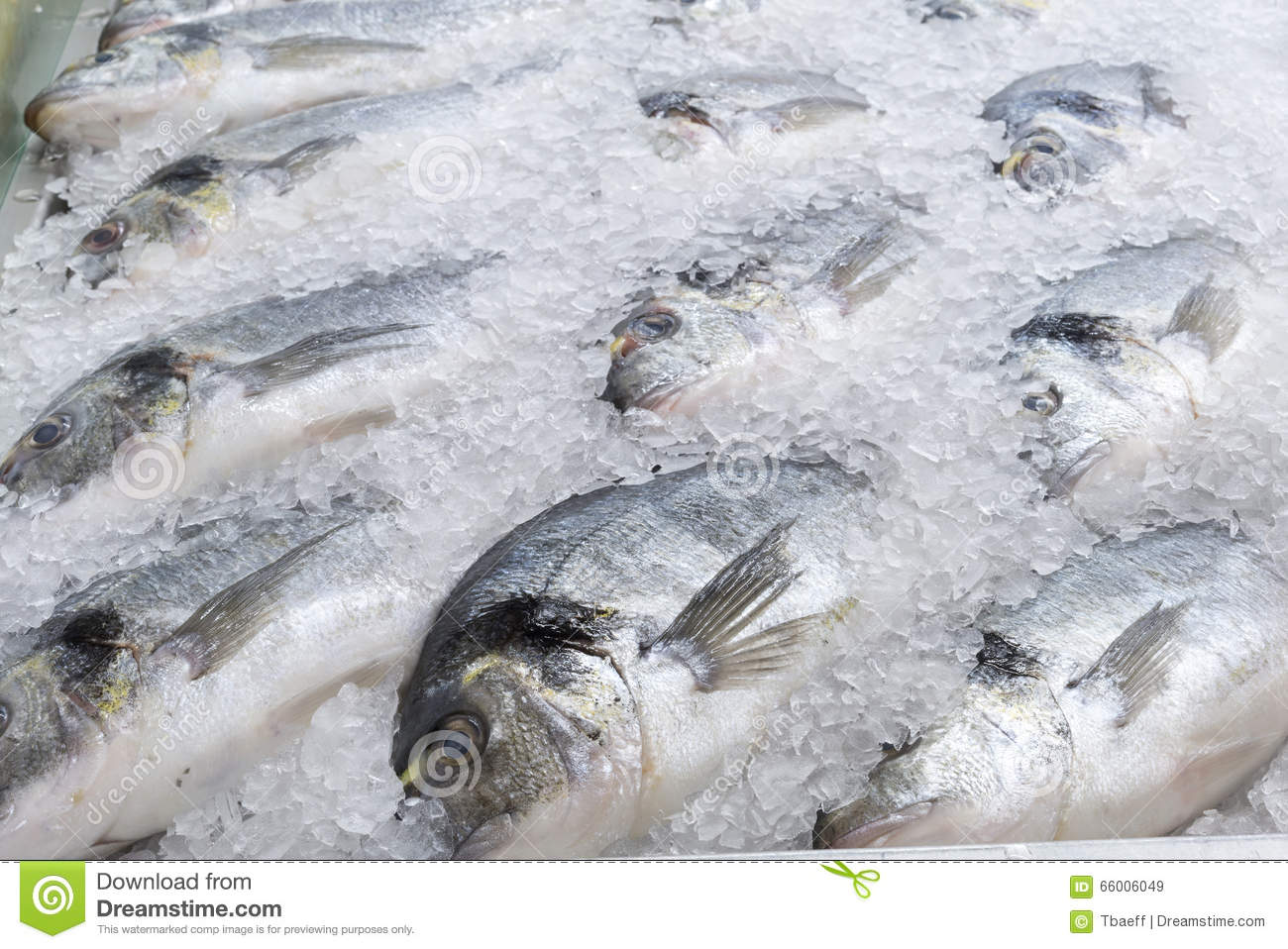 Frozen sea bream fish stock photo image 66006049 for How to freeze fish