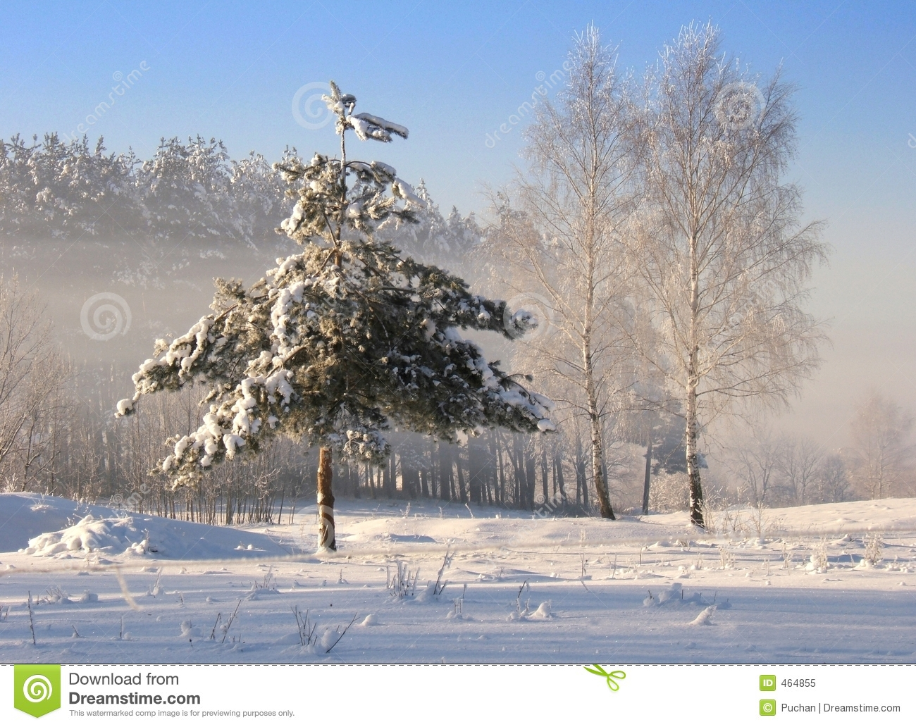 Download Frozen tree stock image. Image of tree, sunny, frost, winter - 464855