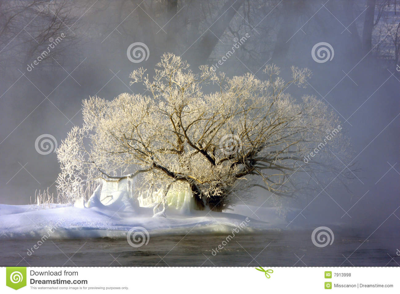 Frozen tree and fog