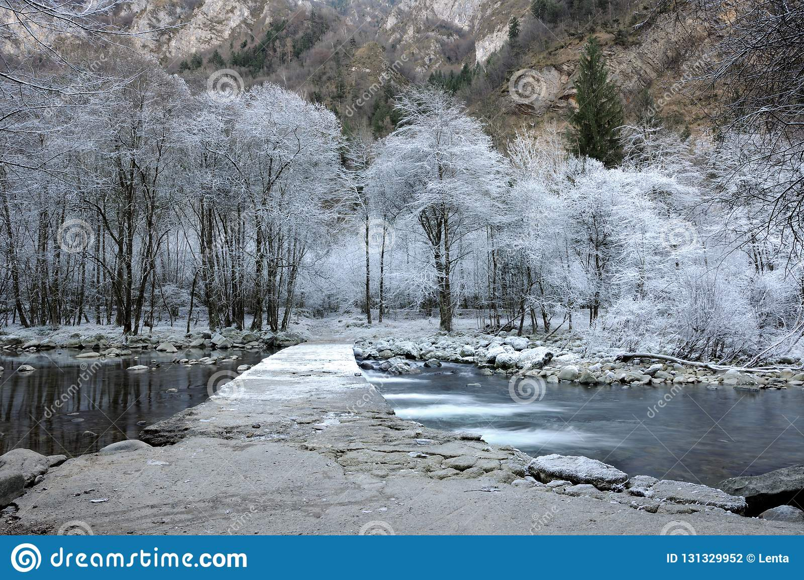 Frozen trees stock photo. Image of snow, panorama, nature ...