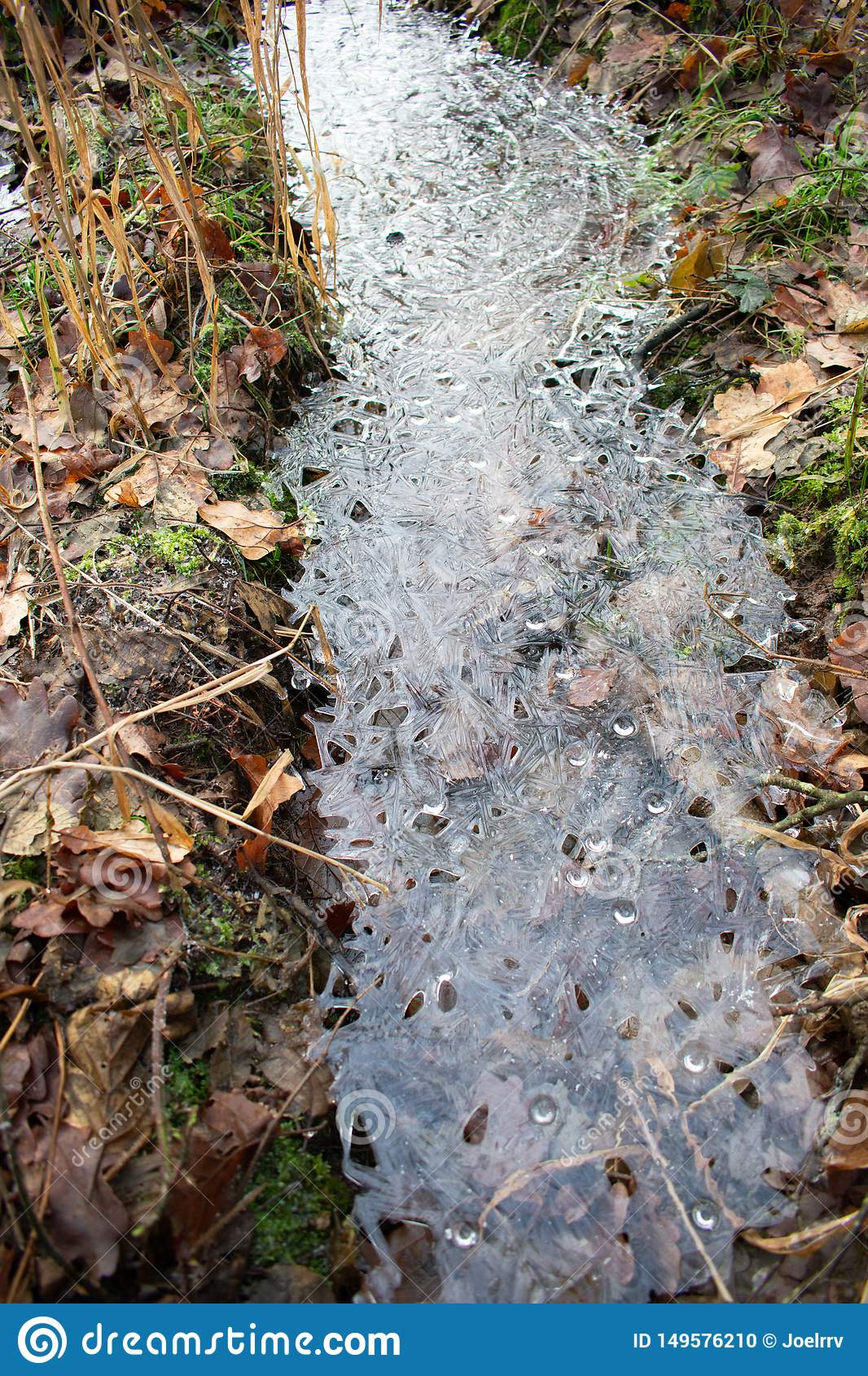 Frozen water puddle in autumn forest