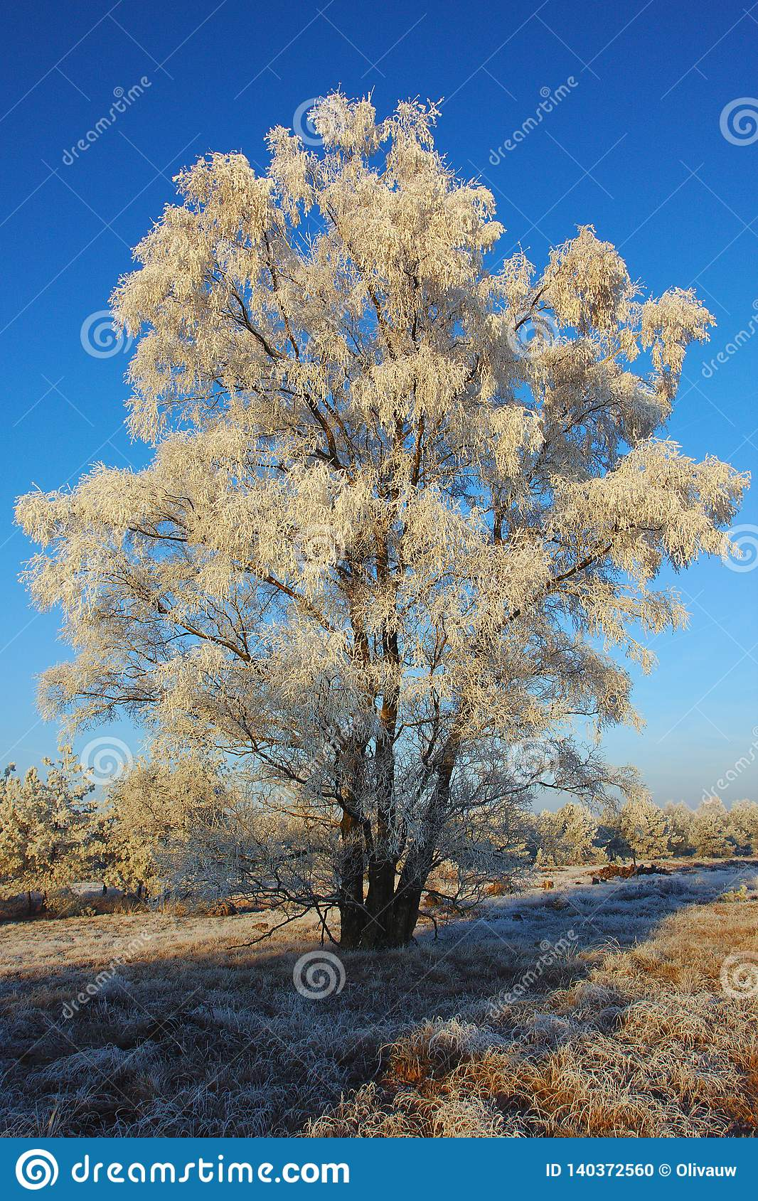 Frozen White Tree in the morning