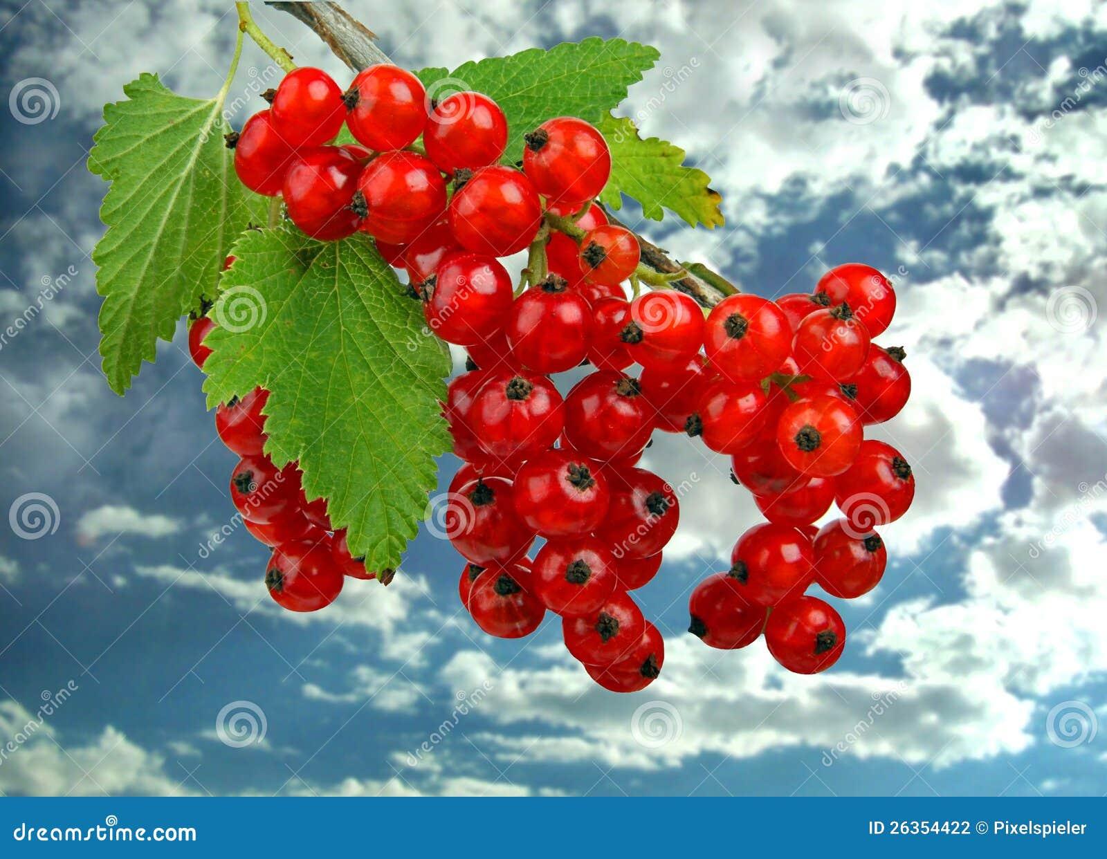 Frucht-Korinthen