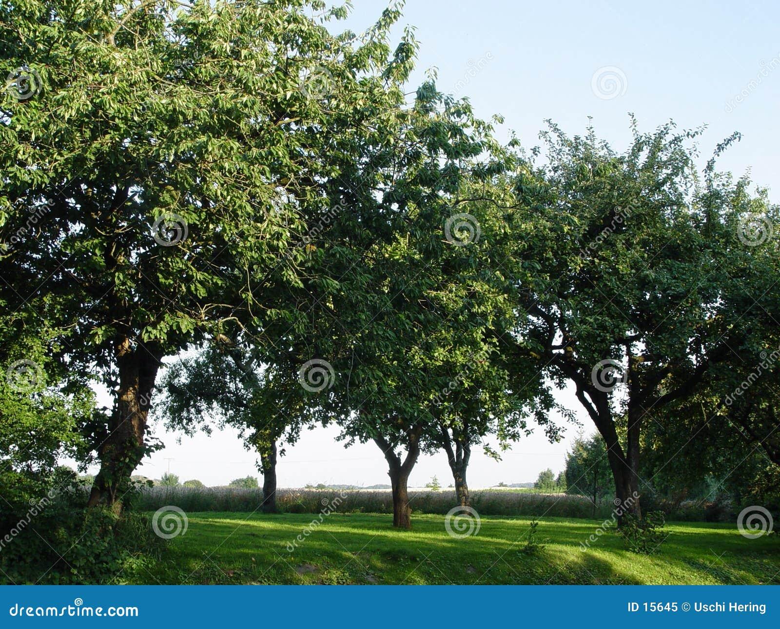 Fruchtobstgarten
