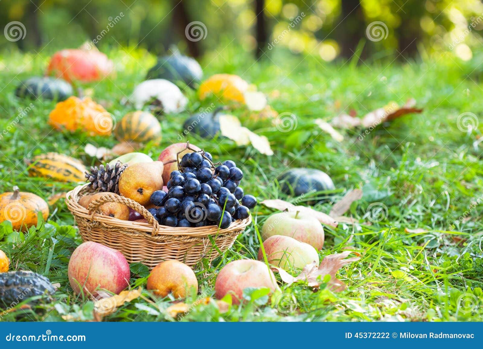 Fruit avec des potirons, des sirops et des courges