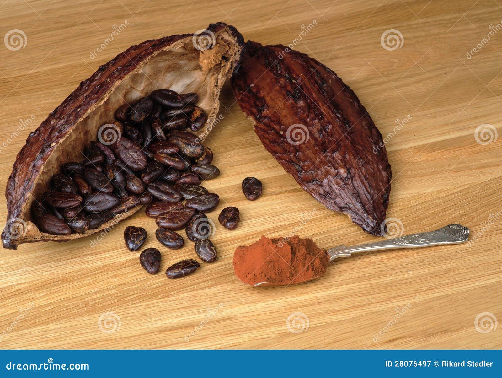 Fruit de cacao