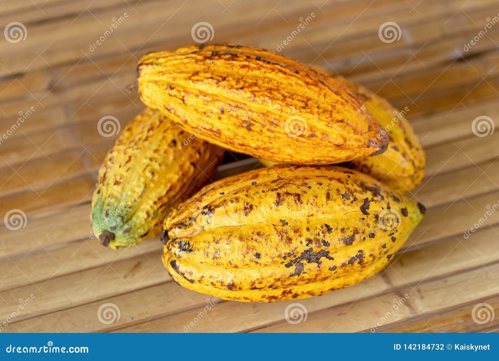 Fruit de cacao, haricots crus de cacao et fond de cosse de cacao