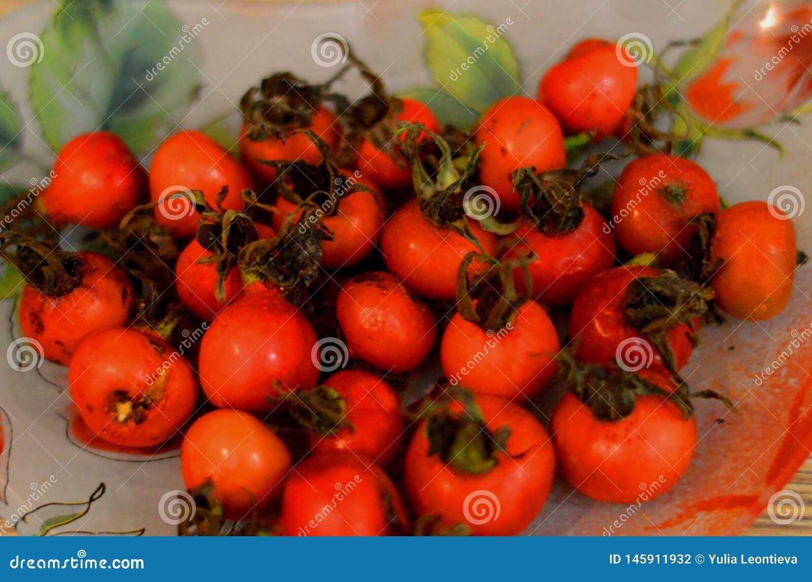 Fruit de Chien-rose ! Usines