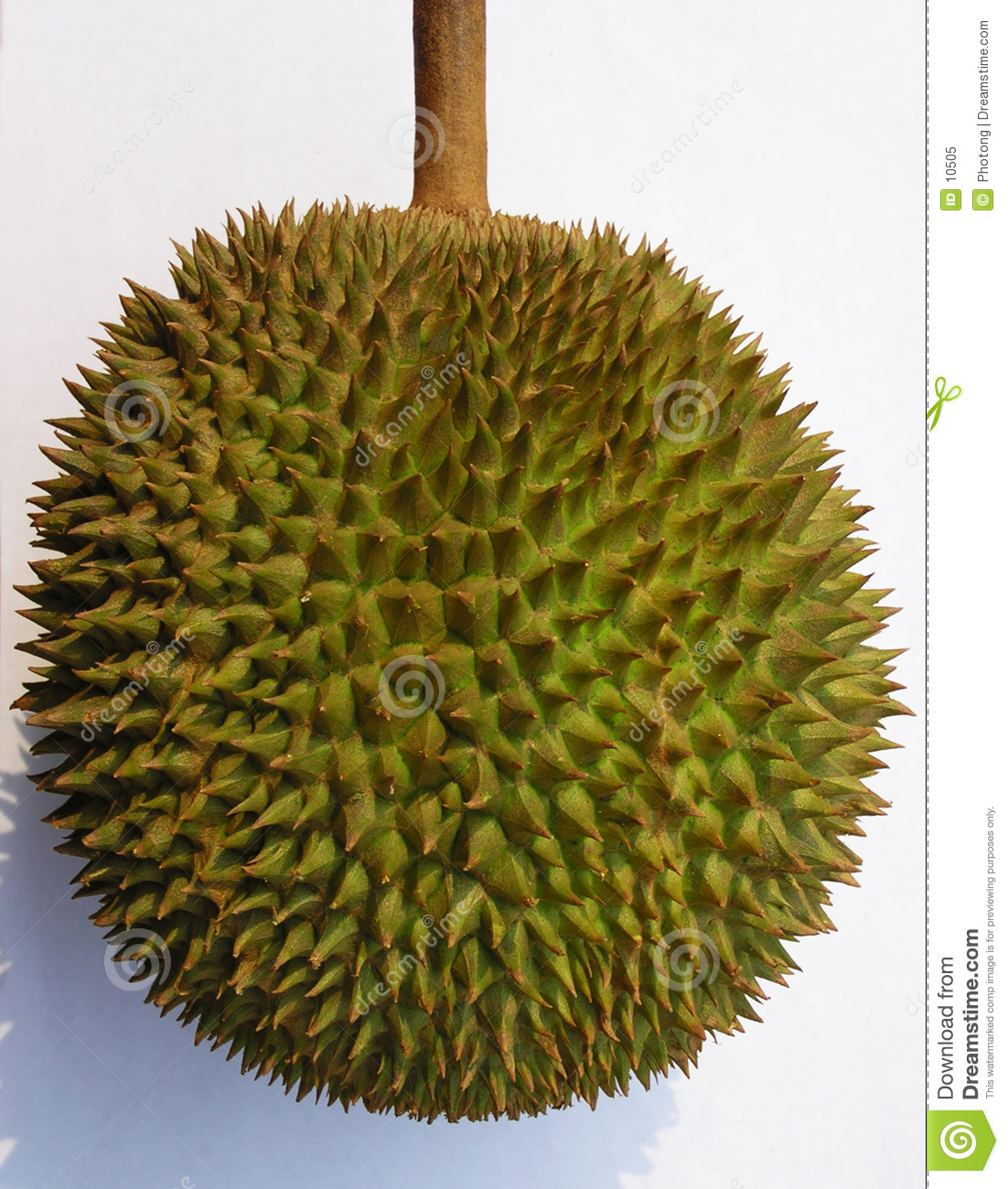 Fruit de durian