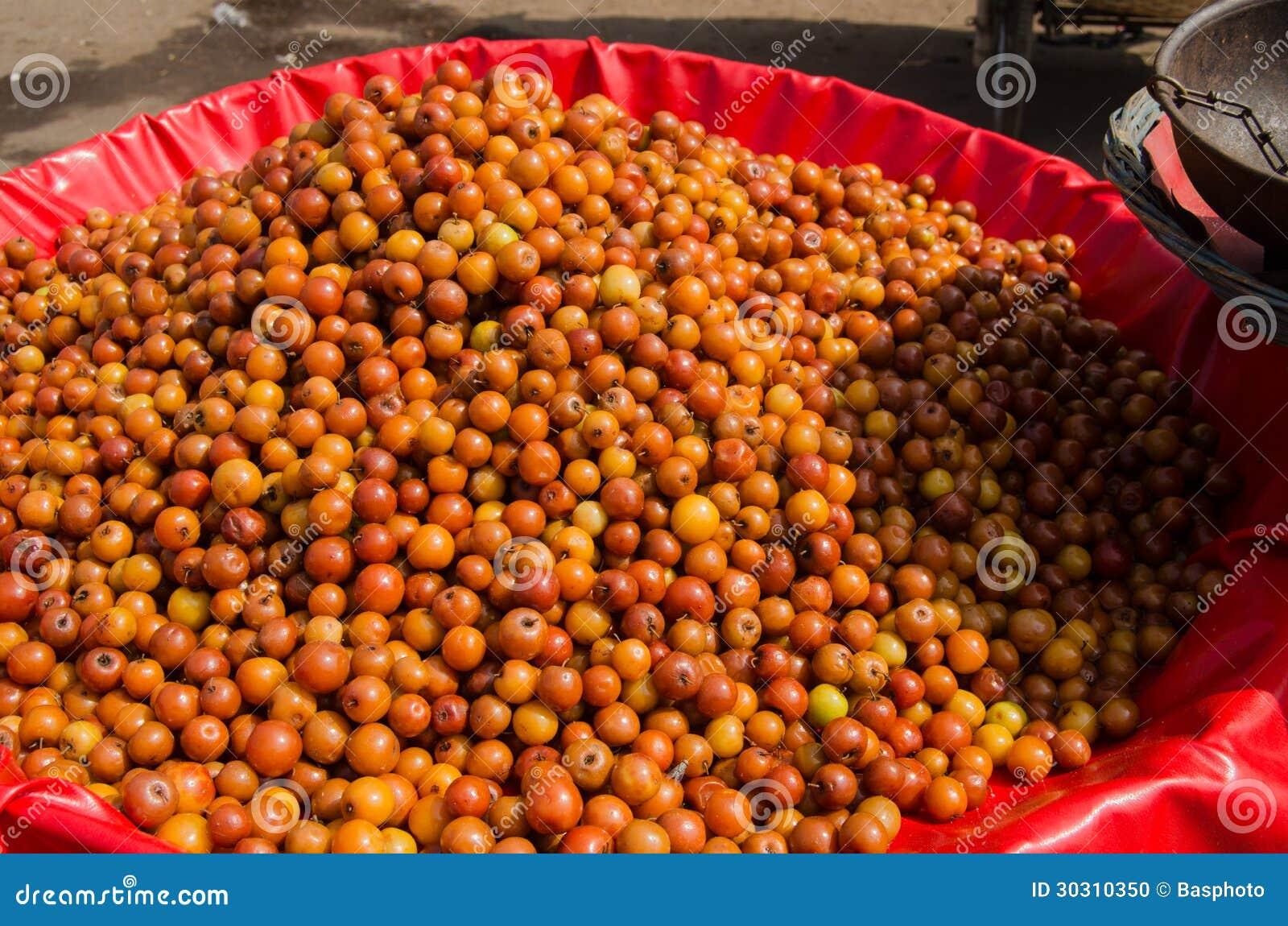 Fruit de jujubes inde photo stock image 30310350 for Portent fruit