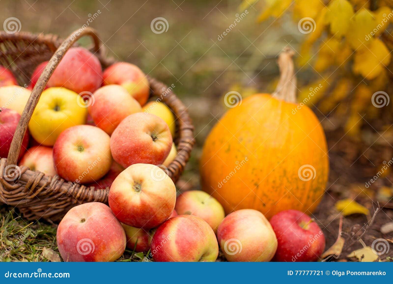 Fruit en groente in tuin