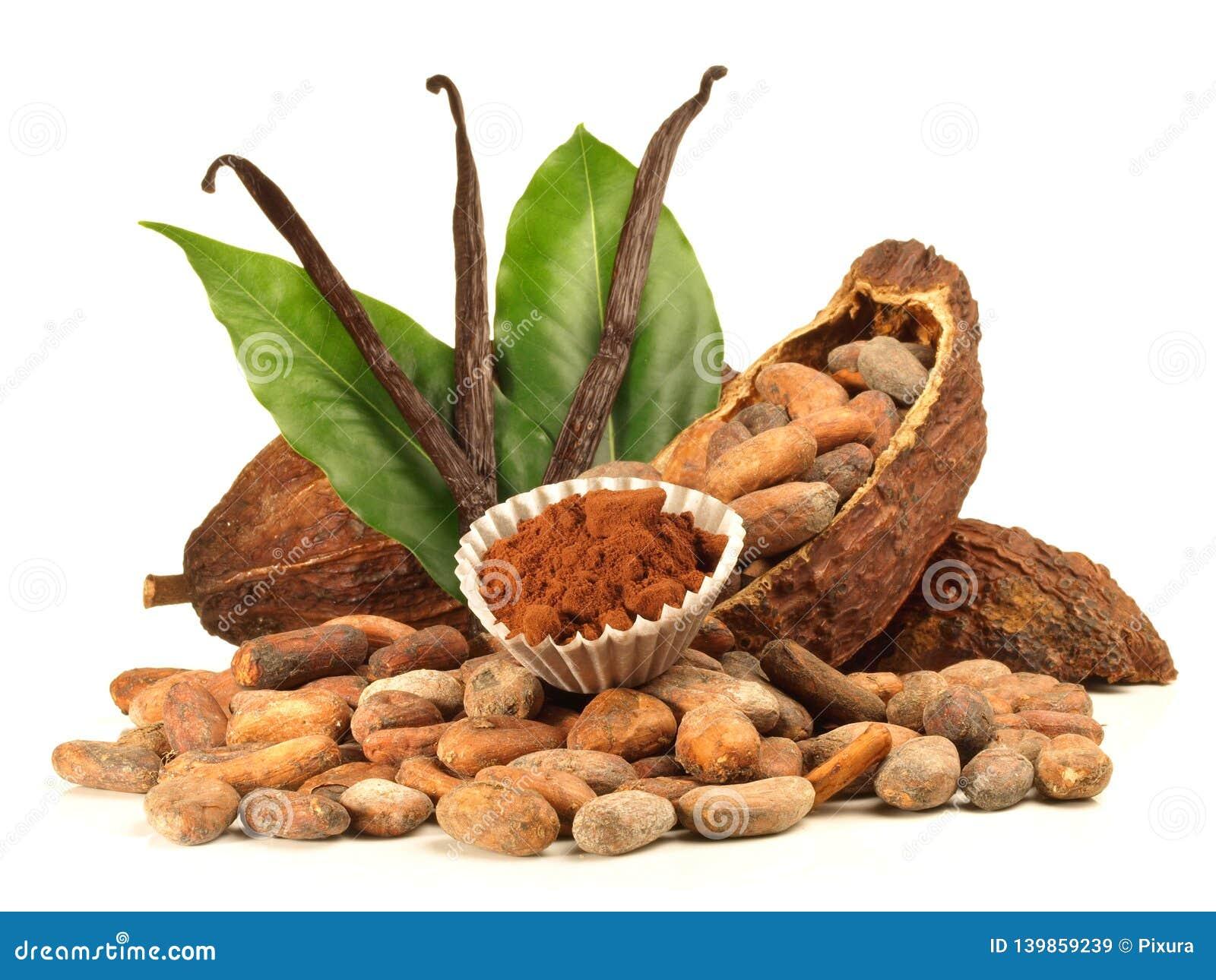 Fruit et haricots secs de cacao avec la vanille