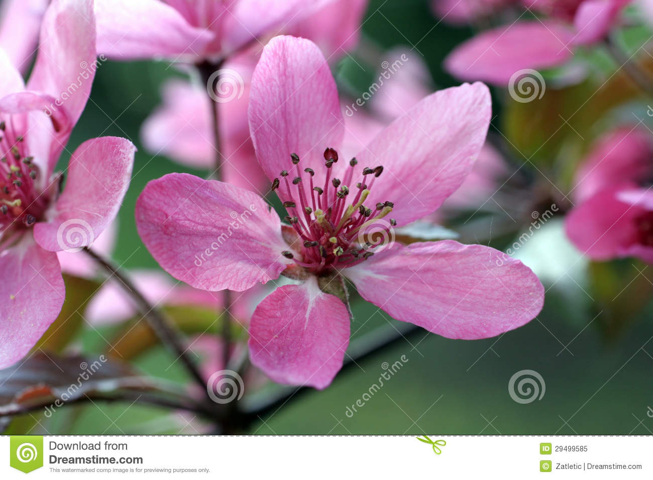 Fruit Flowers Royalty Free Stock Image