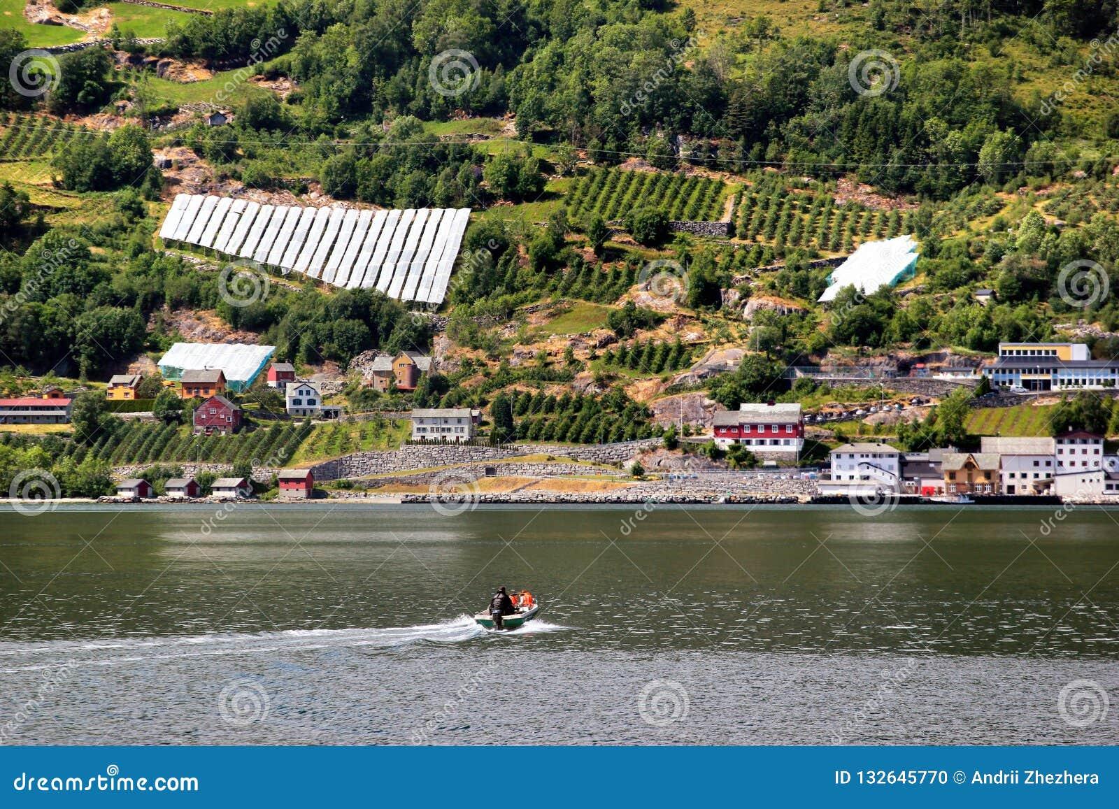 Fruit gardens on coasts of the Hardanger fjord, Hordaland county, Norway