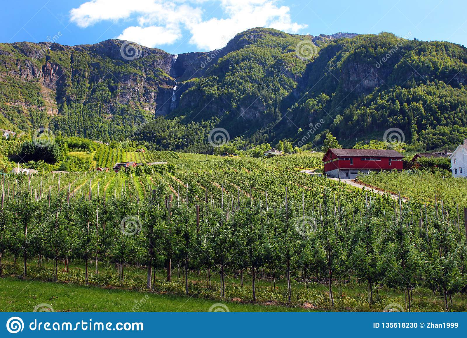 Fruit gardens in Lofthus, near the Hardanger fjord, Hordaland county, Norway