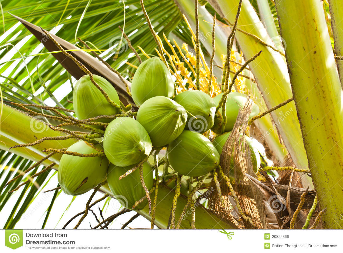 how to get juice from green coconut