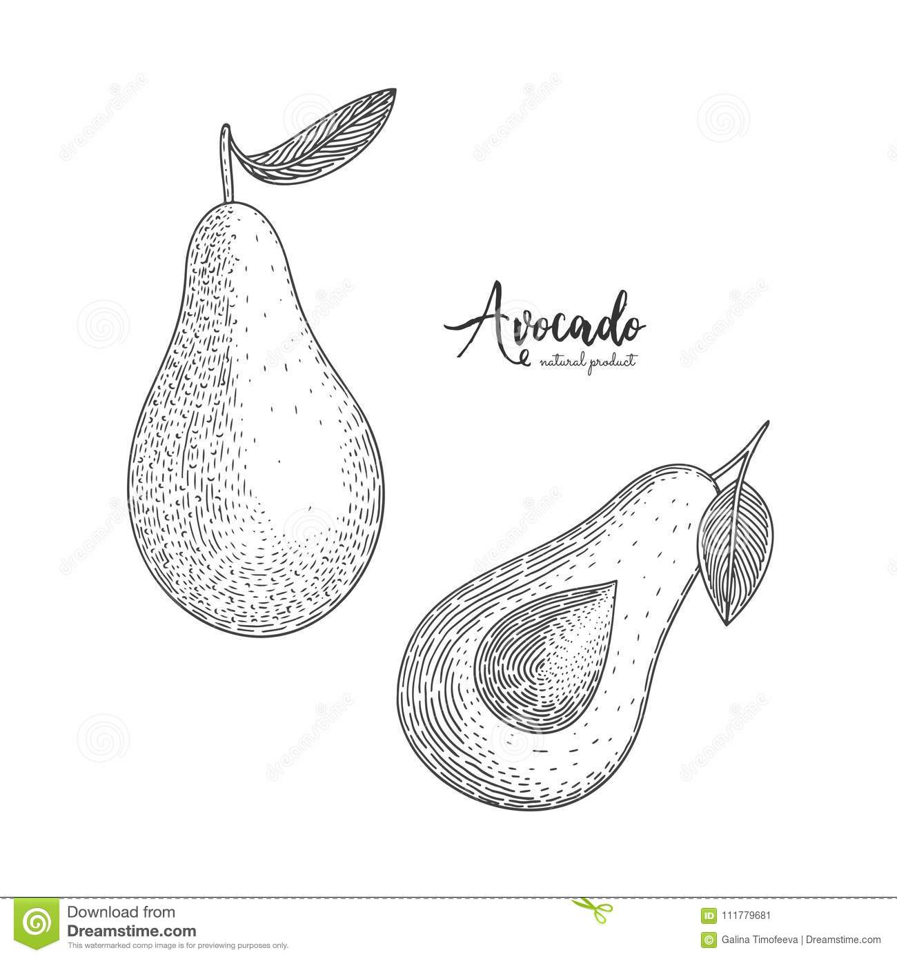 Fruit illustration with avocado in the style of engraving. Detailed vegetarian food. Hand drawn elements for menu