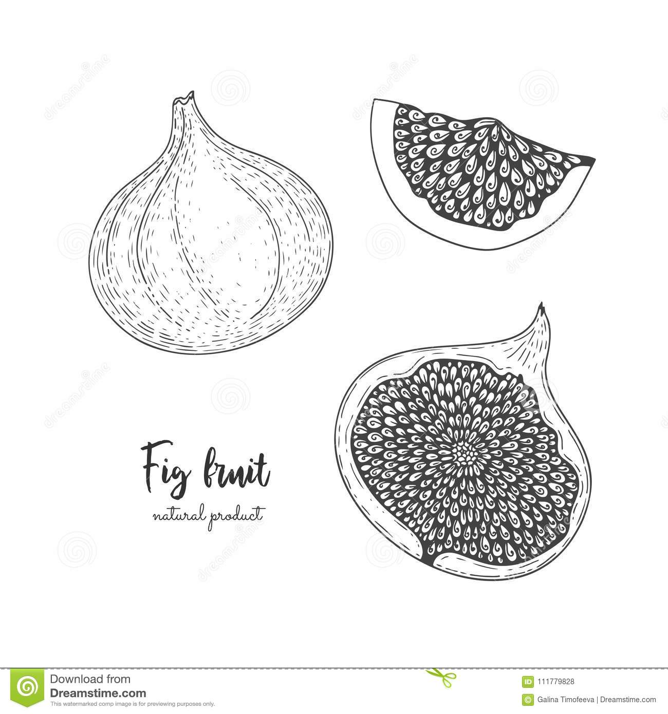 Fruit illustration with figs in the style of engraving. Detailed vegetarian food. Hand drawn elements for menu, greeting