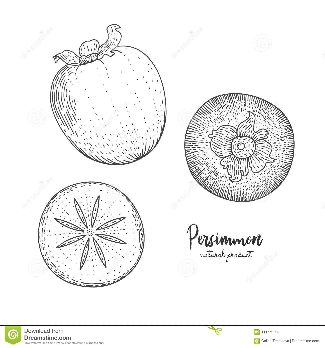 Fruit illustration with persimmon in the style of engraving. Detailed vegetarian food. Hand drawn elements for menu