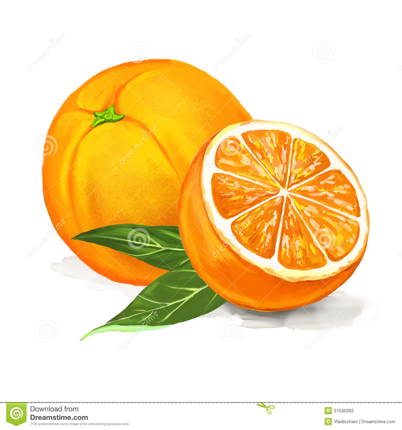 Image Gallery orange fruit drawing