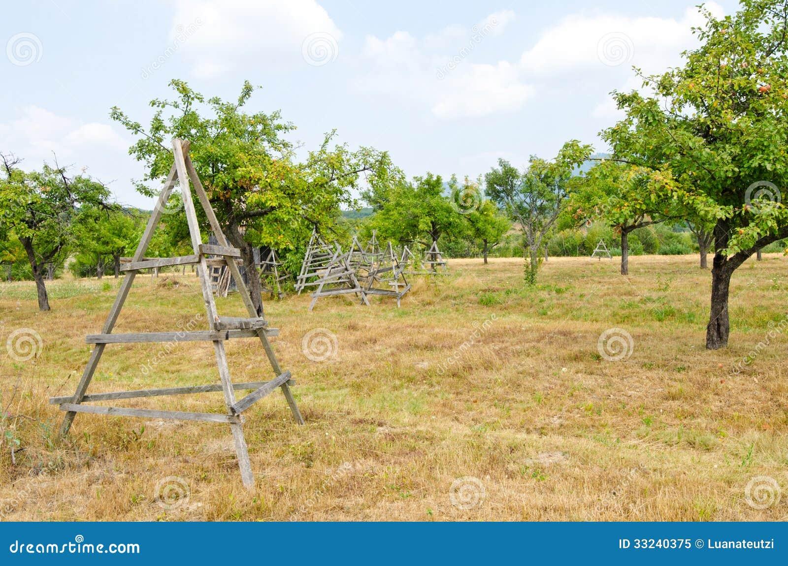 Fruit orchard.