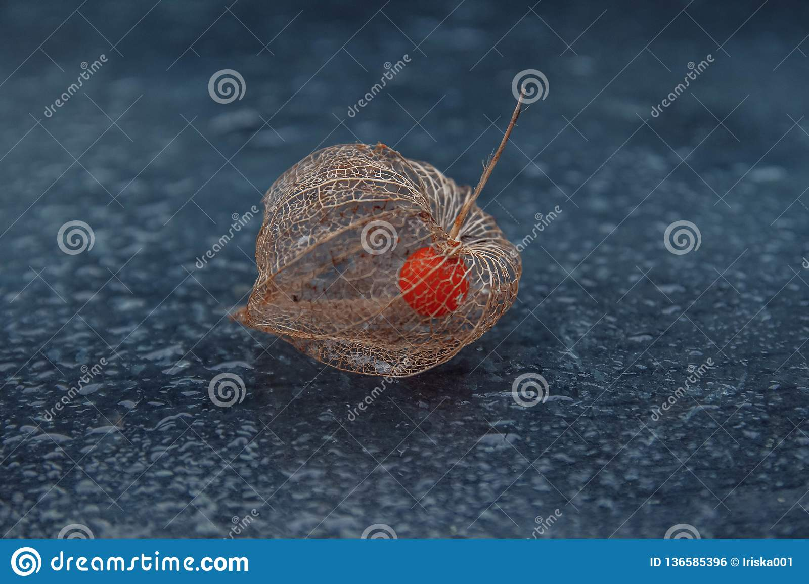 The fruit of physalis in a skeleton box and the bokeh