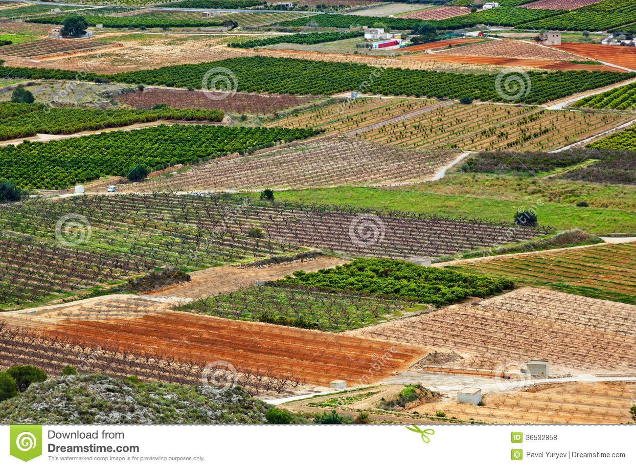 business plan on fruit plantation This sample organic farm business plan is free for you to download and use as a basis for developing your own unique organic  say a member wants a cucuzzi fruit .